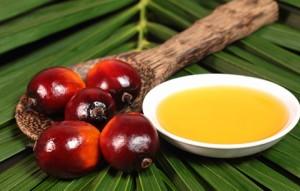 olio di palma s